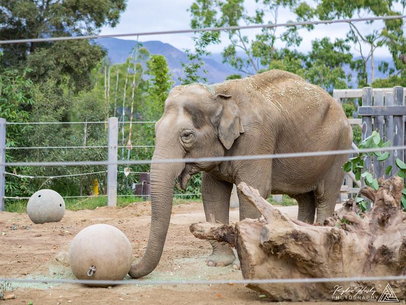 Santa Barbara Zoo 10-13-2018-097.jpg