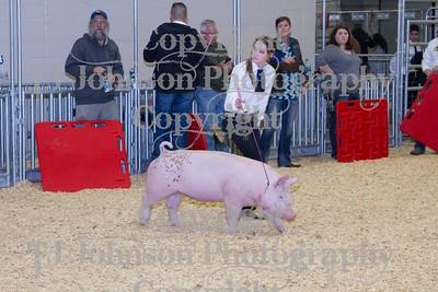 2014 KISD Livestock Show Swine Class 5
