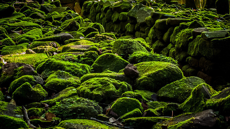 Moss on lava, south of the equator