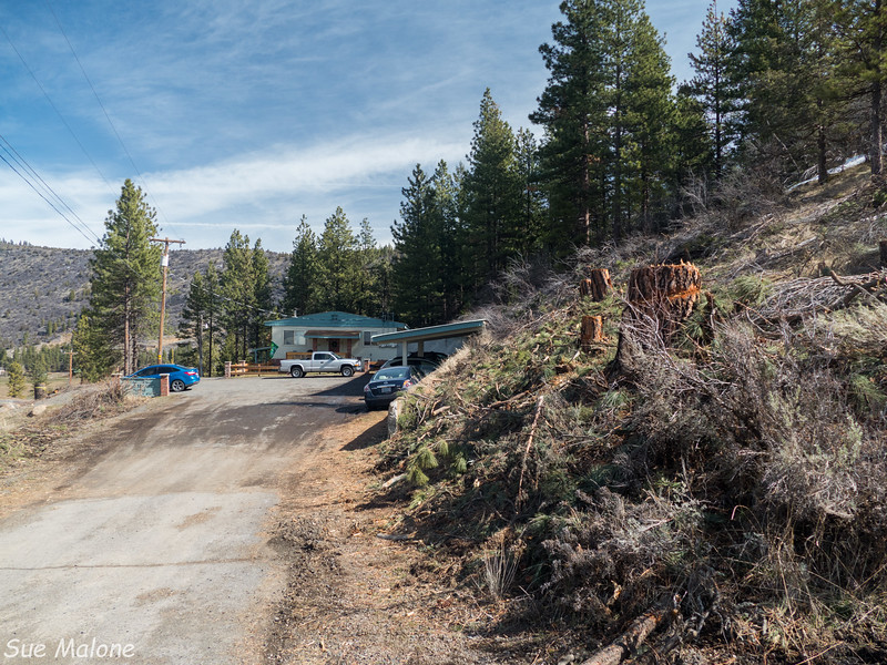 cleared trees at the apartments-9.jpg