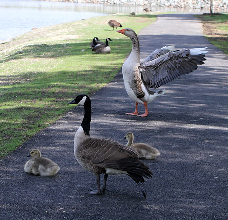 St Charles Pond, May 3, 2012