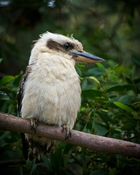 birds  000130.JPG