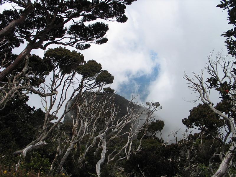 Kinabalu (8).jpg