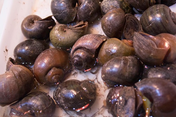 Anyone for snails for dinner?  Xian - Stephanie Pincus