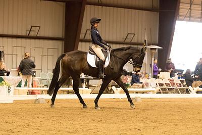 Horse 635