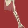 Upper Extremity Skeleton, Posterior View, Portrait