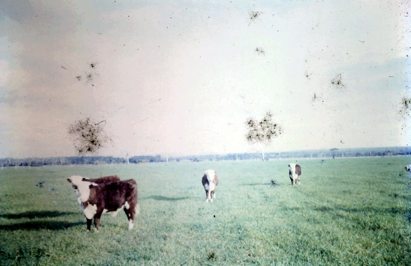 1966-7 (2).JPG