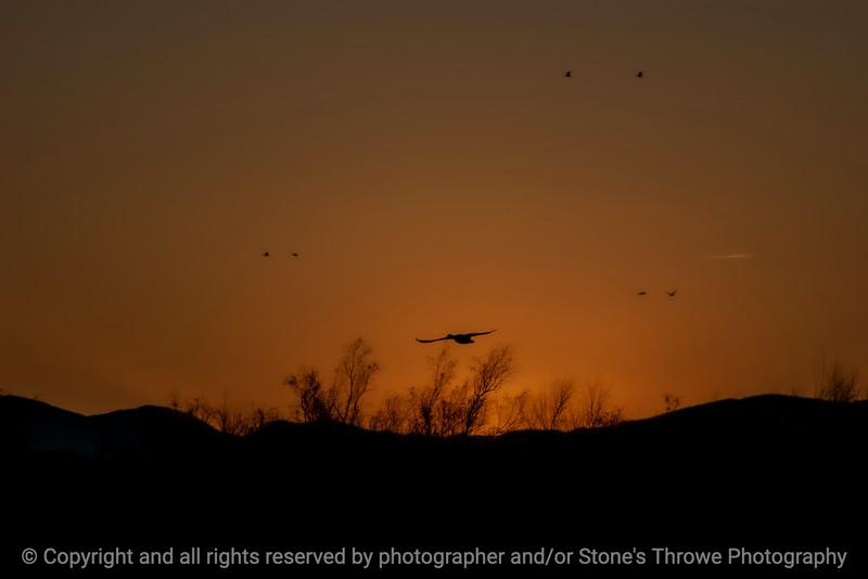 015-sunset-bosque_del_apache_nm-01dec06-12x08-008-350-9874