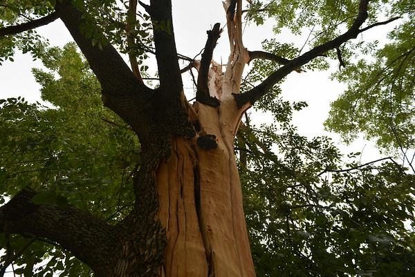 Tree struck by lightning in Duncan