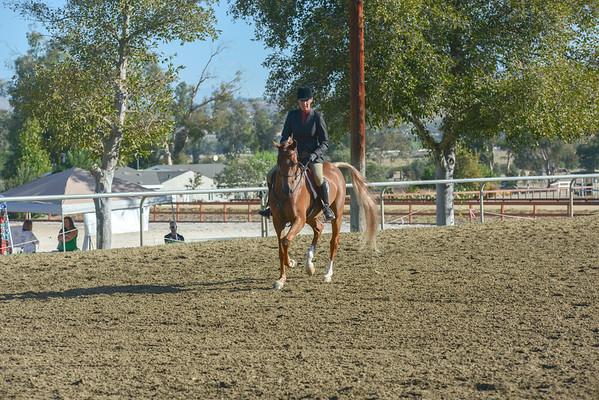 5 Arabian Hunter Pleasure Jr Horse
