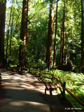 2014_04_07_Muirwoods with Cassandre, Gabrielle Mumu, S2S Giulia's and David's hike