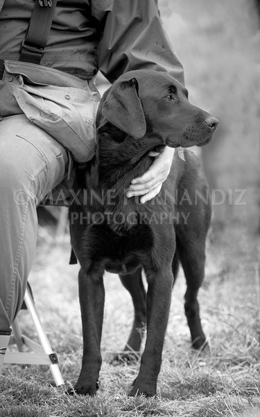 Dave Browns Dog Black and WHite -Edit.jpg