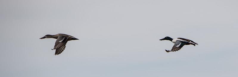 SALTON_SEA_20171802081328.jpg