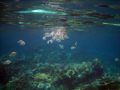 Kyle's Underwater Pix
