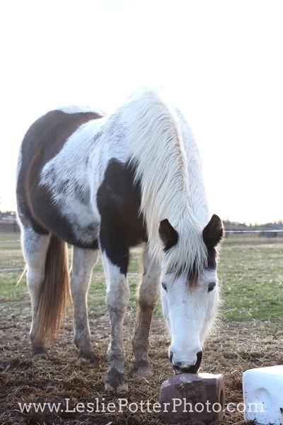 Horse at Mineral Block