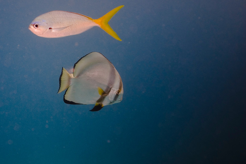 Fish 2, Great Barrire Reef - Cairns, Queensland, Australia