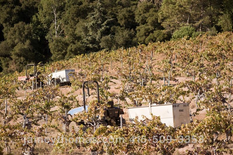 90930_Ridge_Harvest_262.jpg