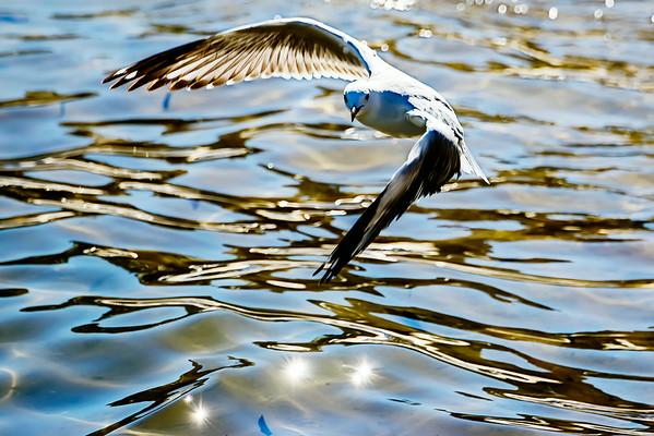 July 2014 - Watsons Bay