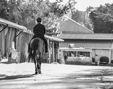 3-23-19 Horse Show