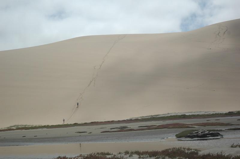 Namib Desert - Leslie Rowley