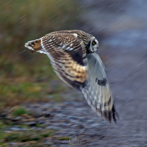sm owls_M4D8666c.jpg