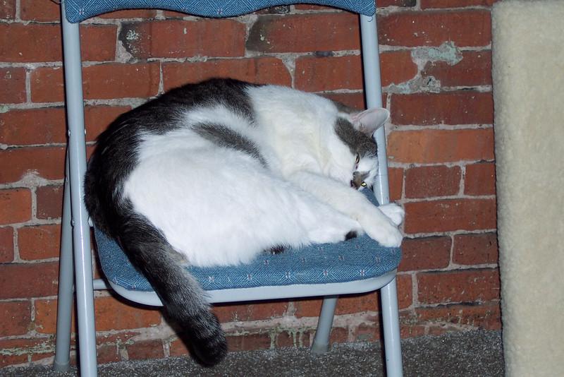 Sleepy Dax 1.JPG