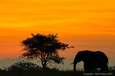 Elephant Sunrise #1