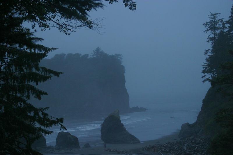 Rainforest_21aug04 098.jpg