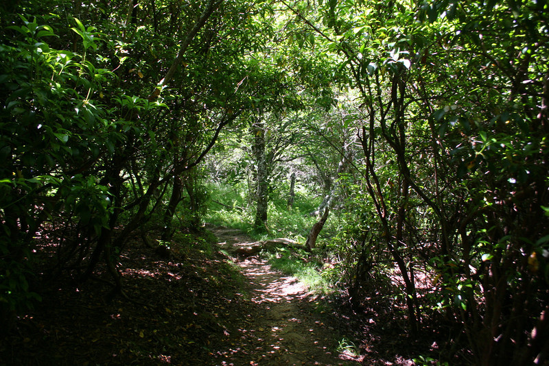 Sam Knob Summit Trail