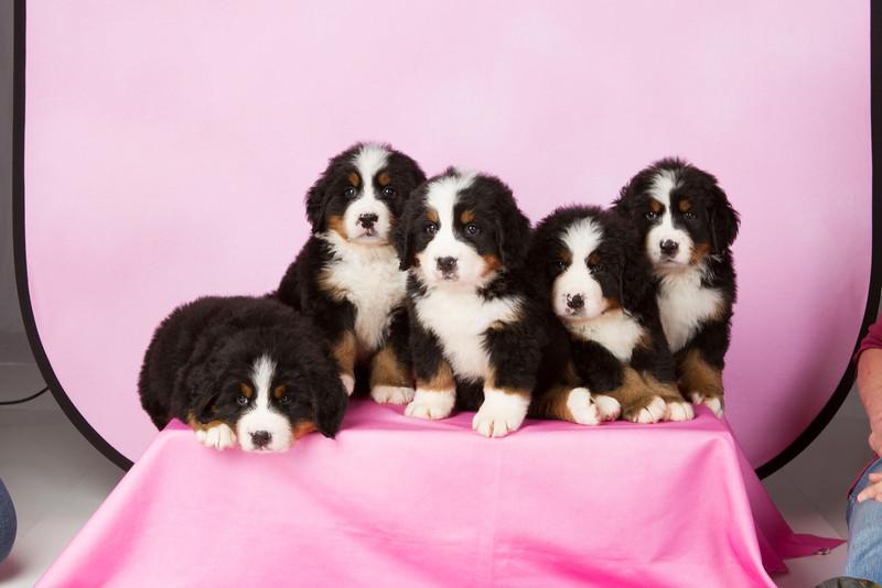 2013-Pearson Pups-Jun02-0298.jpg