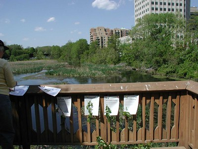 Balston Beaver Pond 1