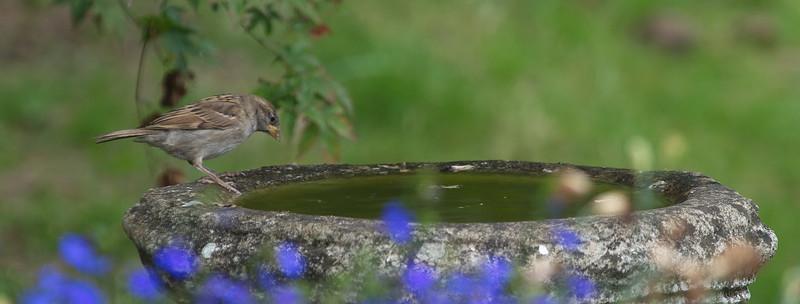 Wild Birds / Raptors