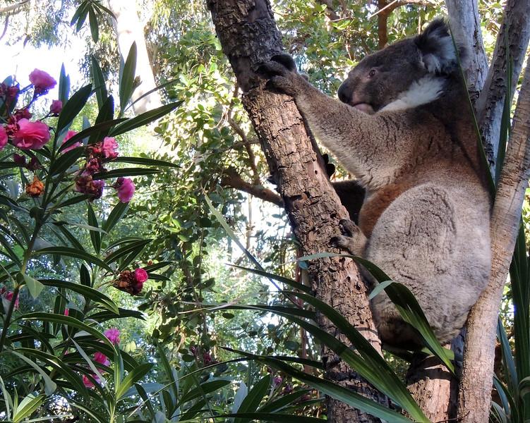 Australia 005 N.jpg