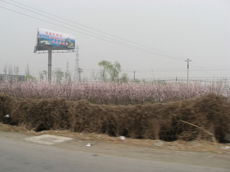 Blooming fruit trees north of Beijing