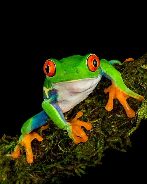 Frogscapes003_Cuchara_0008b_121116_193521_5DM3L.jpg