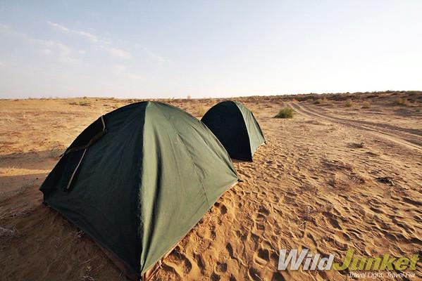 Kyzlkum Desert