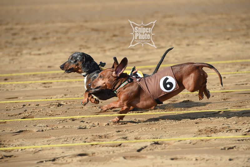 Belterra Park - Wiener Dog Races-8.jpg