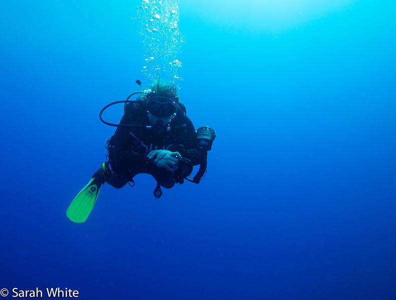 Project Shark 2013-191.jpg
