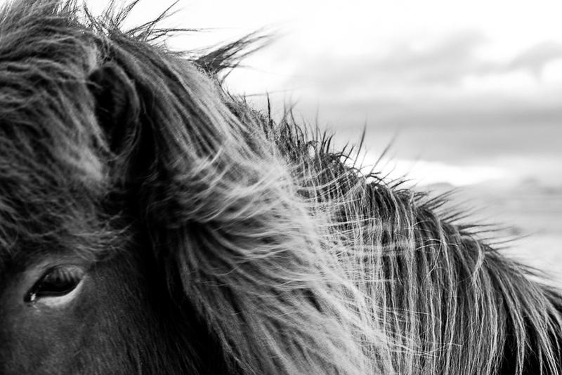 Iceland Beautys-5.jpg