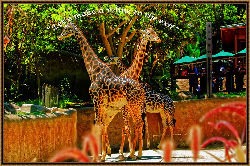 wildlife-30.jpg