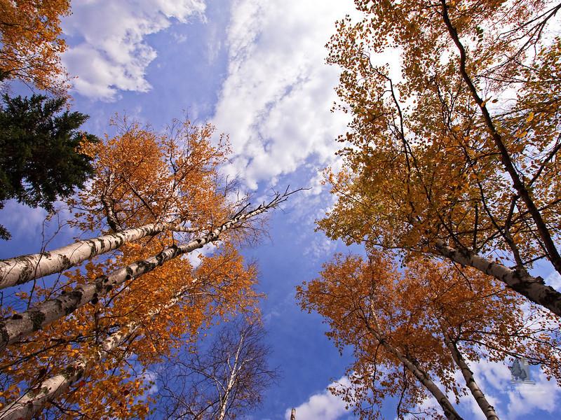 leafgazing2.jpg