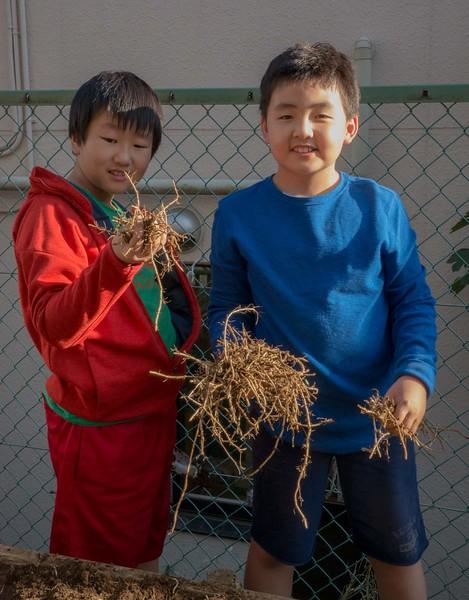 Kirin_Garden_Stock_P1080921.jpg