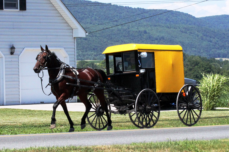 IMG_0946 Yellow Amish buggy.jpg