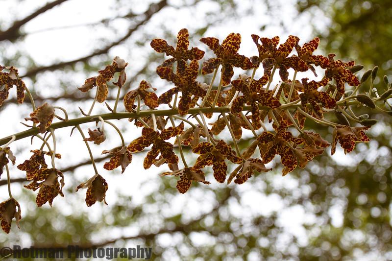 Singapore gardens-6183.jpg