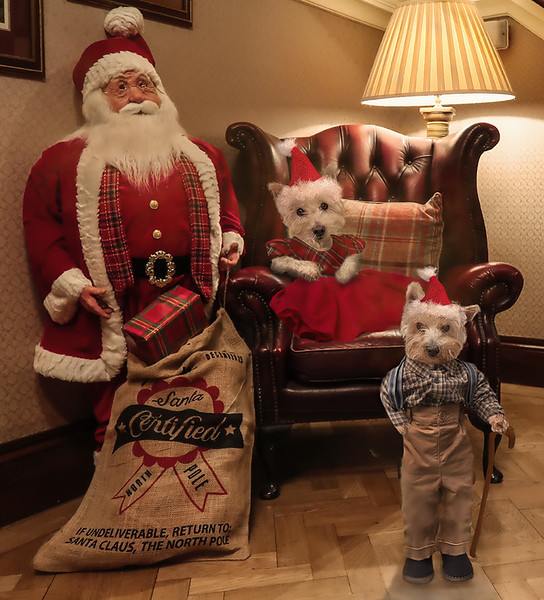 HOLLY FRED CHRISTMAS_WV.jpg