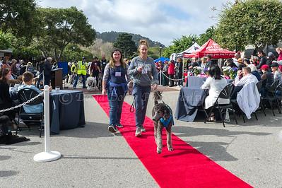 Parade - standard poodles #679 - #845