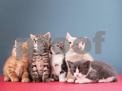 sadistic-serial-animal-killer-known-as-the-croydon-cat-ripper-terrorizes-london-pet-owners