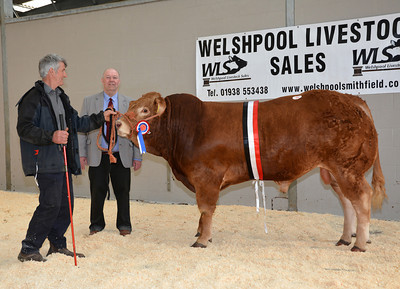 MTH Welshpool Limousins & Salers May 15th 2014