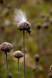 Nature's Magic Photography