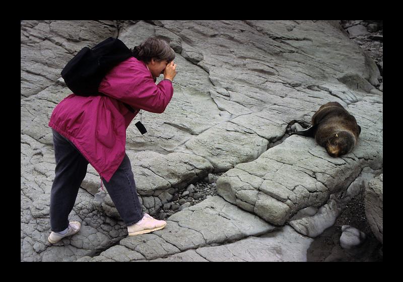 New Zealand Sea Lion - 1996.jpg